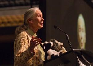 Die bekannte Primatenforscherin Dr. Jane Godall